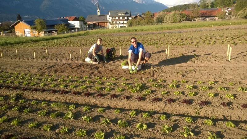2 Personen beim Einpflanzen beim Tiroler Gemeinschaftsgarten in Aldrans
