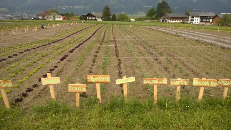 Feld Aldrans Gemüse mit Beschriftung Tiroler Gemeinschaftsgarten